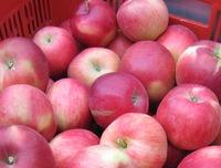 秋ですね、米沢は全国一の紅玉の産地、これは紅玉です。