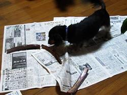新聞がないとデロンデロンになるので・・・