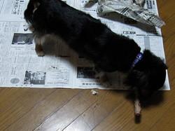 なんか新聞紙も一緒にカミカミしているような気がしますが・・・・